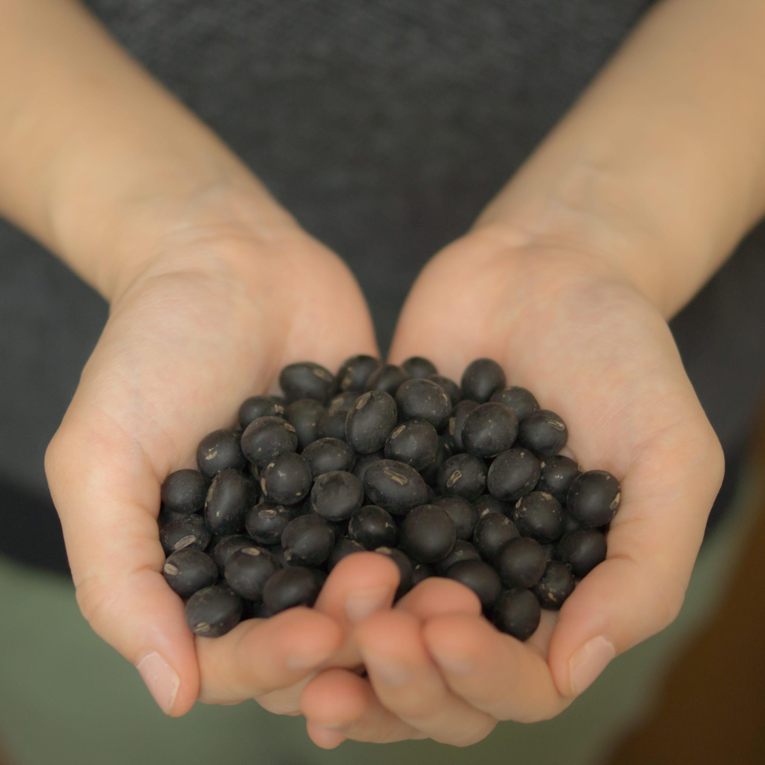自然栽培の丹波黒枝豆/大豆 3回目の総括